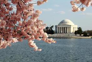 Monumento a Jefferson con flores de cerezo