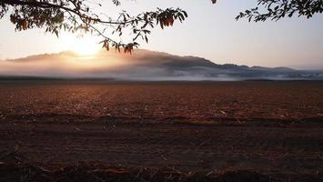Sugar cane field photo