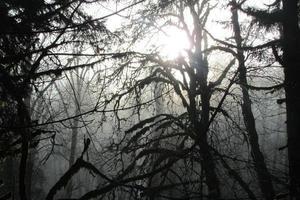 manhã nublada de oregon com árvores
