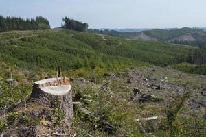 Clear cut forest, signs of reforestation