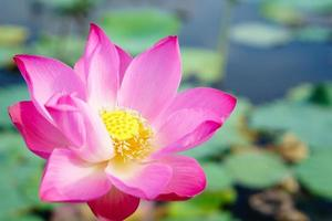 lago de loto