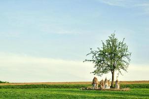 Ukrainian wooden hives in a field under a tree photo