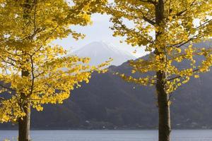 Ginkgo leaves and Mt.Fuji, Japan