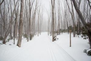 camino de montaña del lago foto
