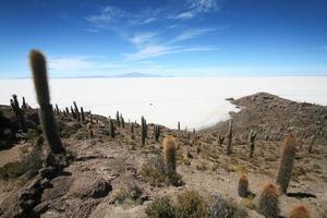 fauna andina eduardo abaroa, isla de los pescados foto