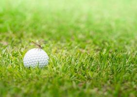 Dragonfly hold on golf ball