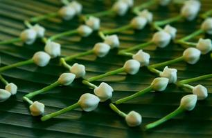 fresh white jasmine on green banana leaf
