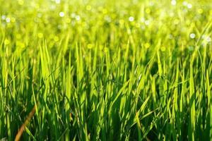 hierba verde y luz. foto