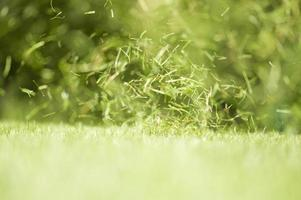 briznas de hierba, girando en el viento foto