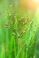 hierba verde en el parque foto