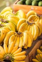 Variety of ripe bananas
