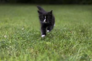 gatito corriendo foto