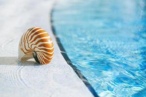 nautilus shell at resort swimming pool edge photo