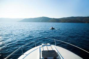 Bootsausflug mit Delfin photo