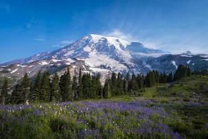 Beautiful wildflowers and Mount Rainier photo