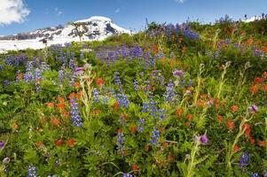 Mt. Baker Wildflowers photo