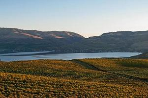 vista del lago chelan desde el viñedo de benson foto