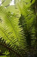 Ferns Light and Dark
