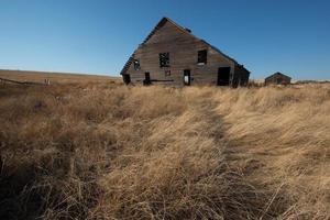 Wheat Fields surrounding Old Farm Homestead Abandoned Farmhouse Western Americana
