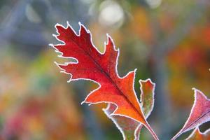 single red leave