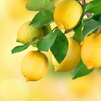 racimo de limón, bokeh