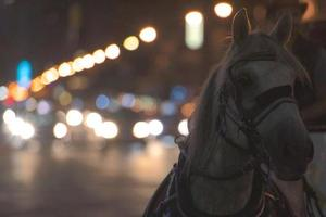 Horse Drawn photo
