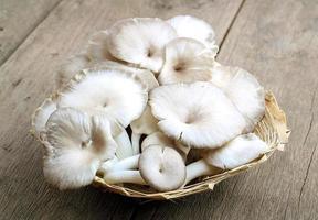 Phoenix Mushroom. photo