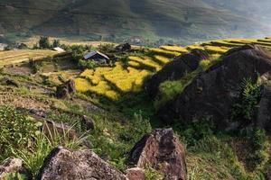 prachtig rijstterras in sapa, vietnam