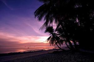 puesta de sol de palmera foto