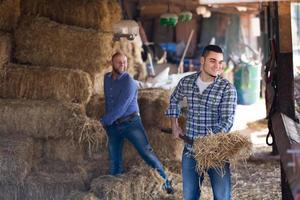 Two farmers working in barn photo