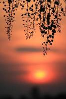 flores silueta puesta de sol