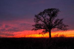 Oak tree sunset photo