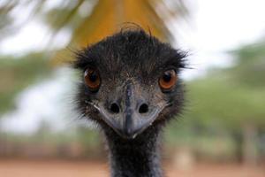 EMU photo