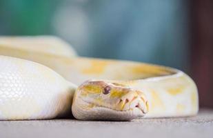 Close up snake