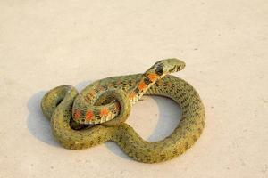 serpiente foto