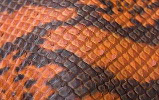 Orange Snakeskin