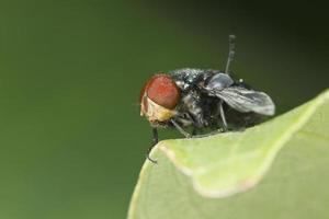the flies photo