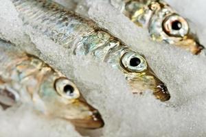Baltic herring. photo