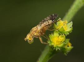 grote vlieg op een gele bloeiwijze