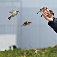 vogels tijdens de vlucht