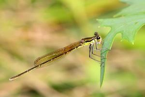damsel-fly on the grass