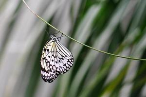 Rice Paper Butterfly Hanging From A Vine