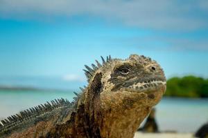hermosa iguana descansando en la playa santa cruz galápagos