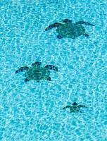 tres tortugas de azulejos en el fondo de la piscina