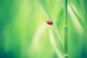 Beautiful vintage photo of ladybug