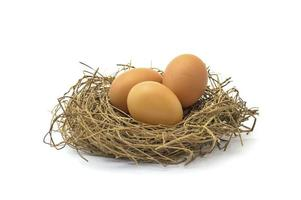 huevo de gallina en pasto seco foto