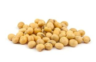 soybean isolated photo