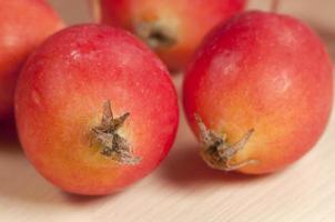Crab (Paradise) apples