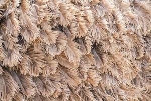 avestruz pena marrom