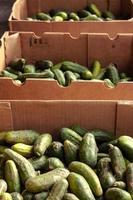 Mercado de agricultores foto